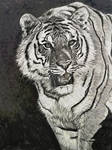 Tiger in charcoal/digital.