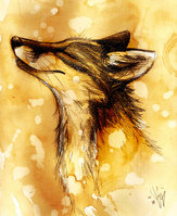 Random Fox by Culpeo Fox by MissWolf10