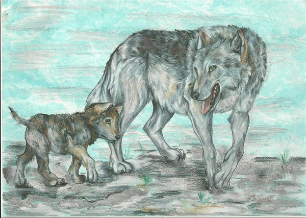 Голодный как волк рисунок