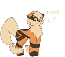 Torch The Arcanine