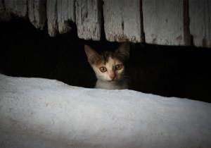 ArgiPhoto's Profile Picture