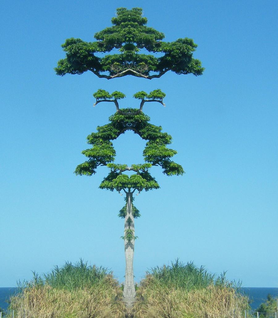 Maple Tablelander by tablelander
