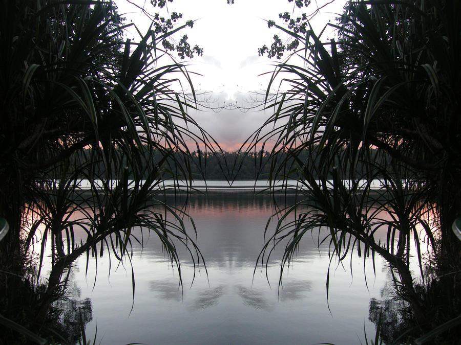 UN DESCANSO EN EL CAMINO Pandanus_window_by_tablelander-d536rhc