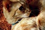fiyonk the cat
