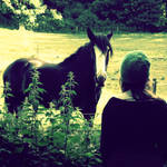 Conversation with a Horse II