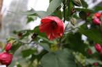 Botanical Gardens - Dundee II