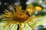 Botanical Gardens-Dundee IX
