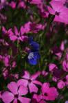 Botanical Gardens-Dundee XI