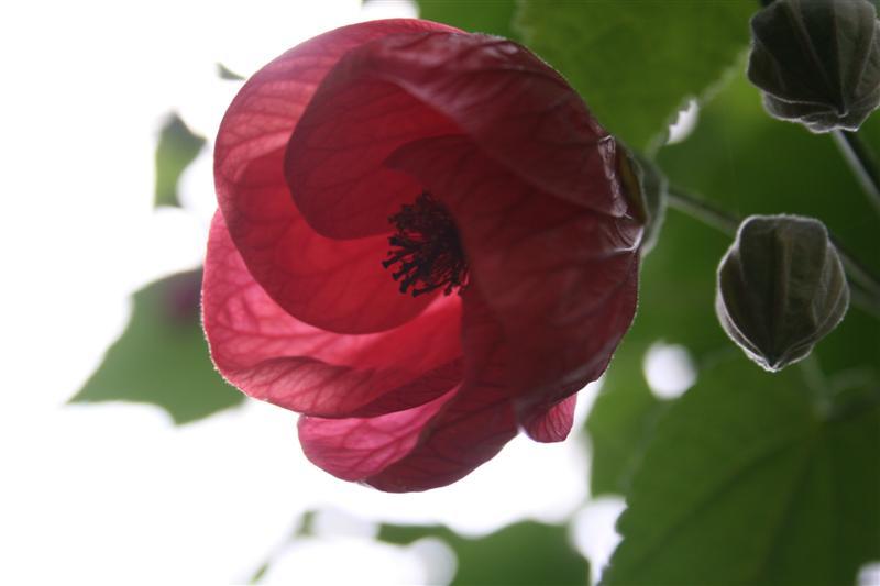 Botanical Gardens-Dundee XX