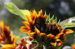 Botanical Gardens-Dundee XXIV