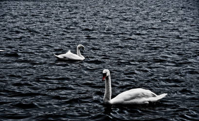 16Mar2011 by jaredarm