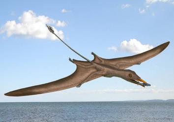 Eudimorphodon ranzii by paleopeter