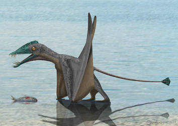 Dorygnathus banthensis by paleopeter