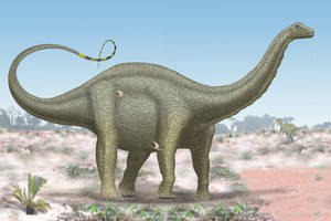 Apatosaurus by paleopeter