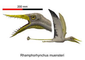 Rhamphorhynchus muensteri by paleopeter