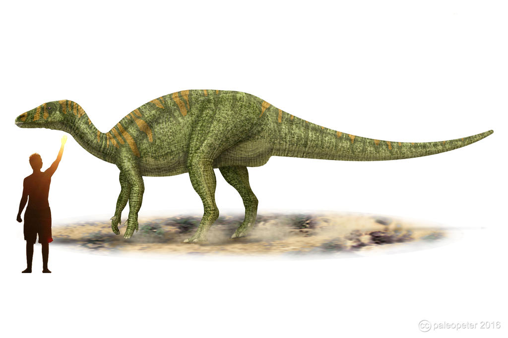 Camptosaurus dispar by paleopeter