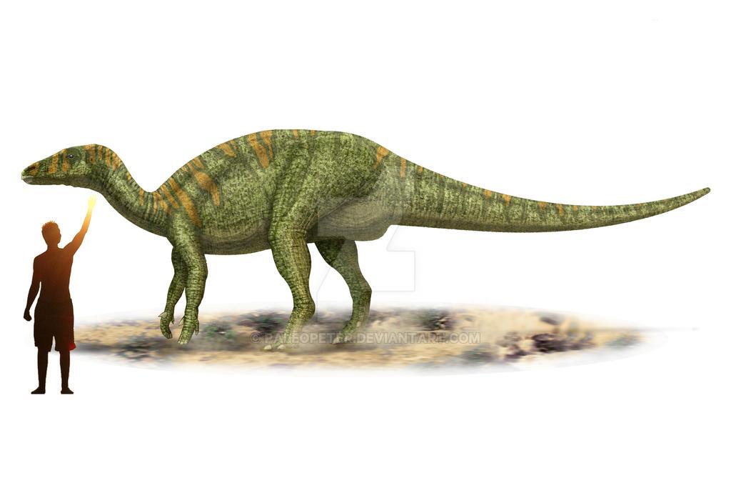 Camptosaurus dispar