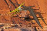 Pteranodon sunset