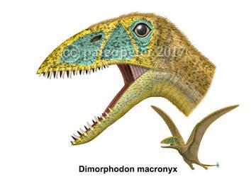 Dimorphodon macronyx by paleopeter