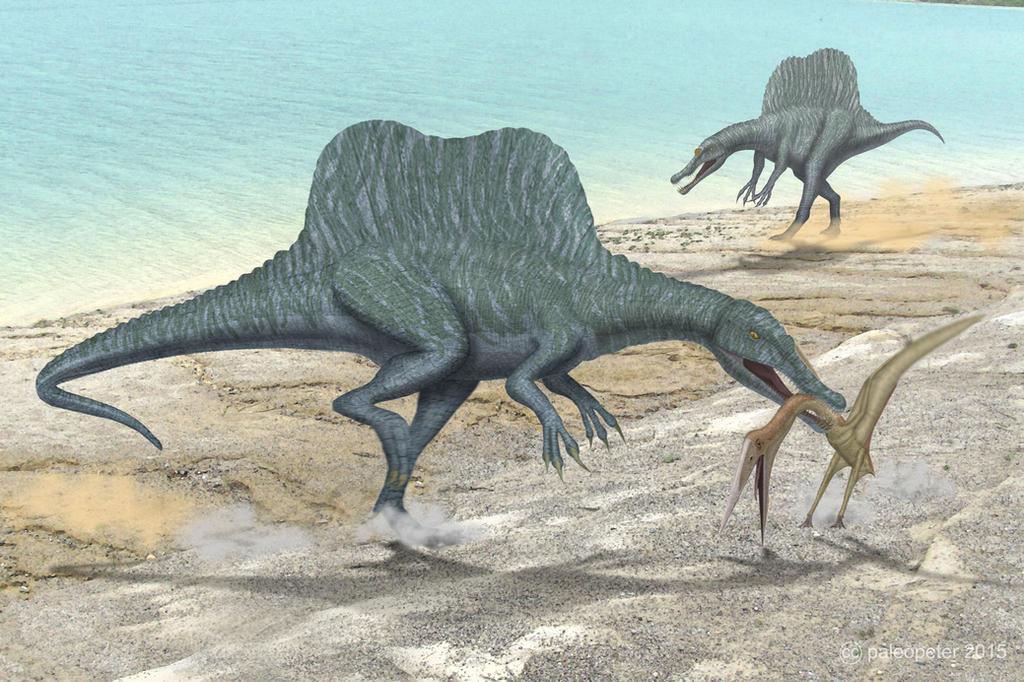 Spinosaurus + Alanqa by paleopeter