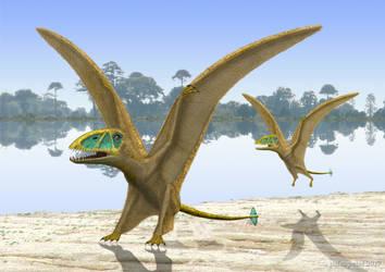 Dimorphodon landing by paleopeter