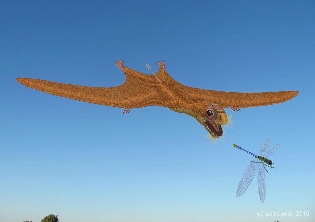 Anurognathus | TV Dinos Wiki | FANDOM powered by Wikia