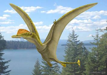 Darwinopterus by paleopeter