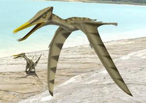 Gallodactylus 2