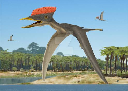 Germanodactylus cristatus flight