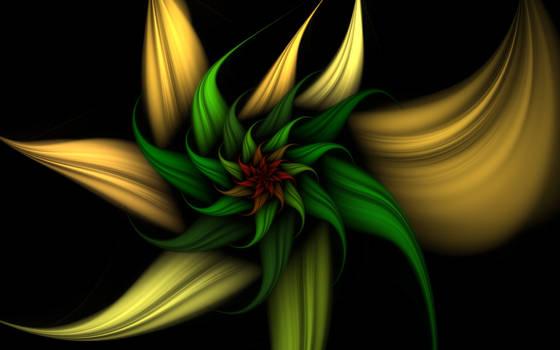 Flower for Christmas