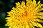 Sun of the meadow by biretta