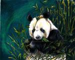 snacking panda