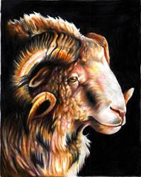 -sheep by EatToast