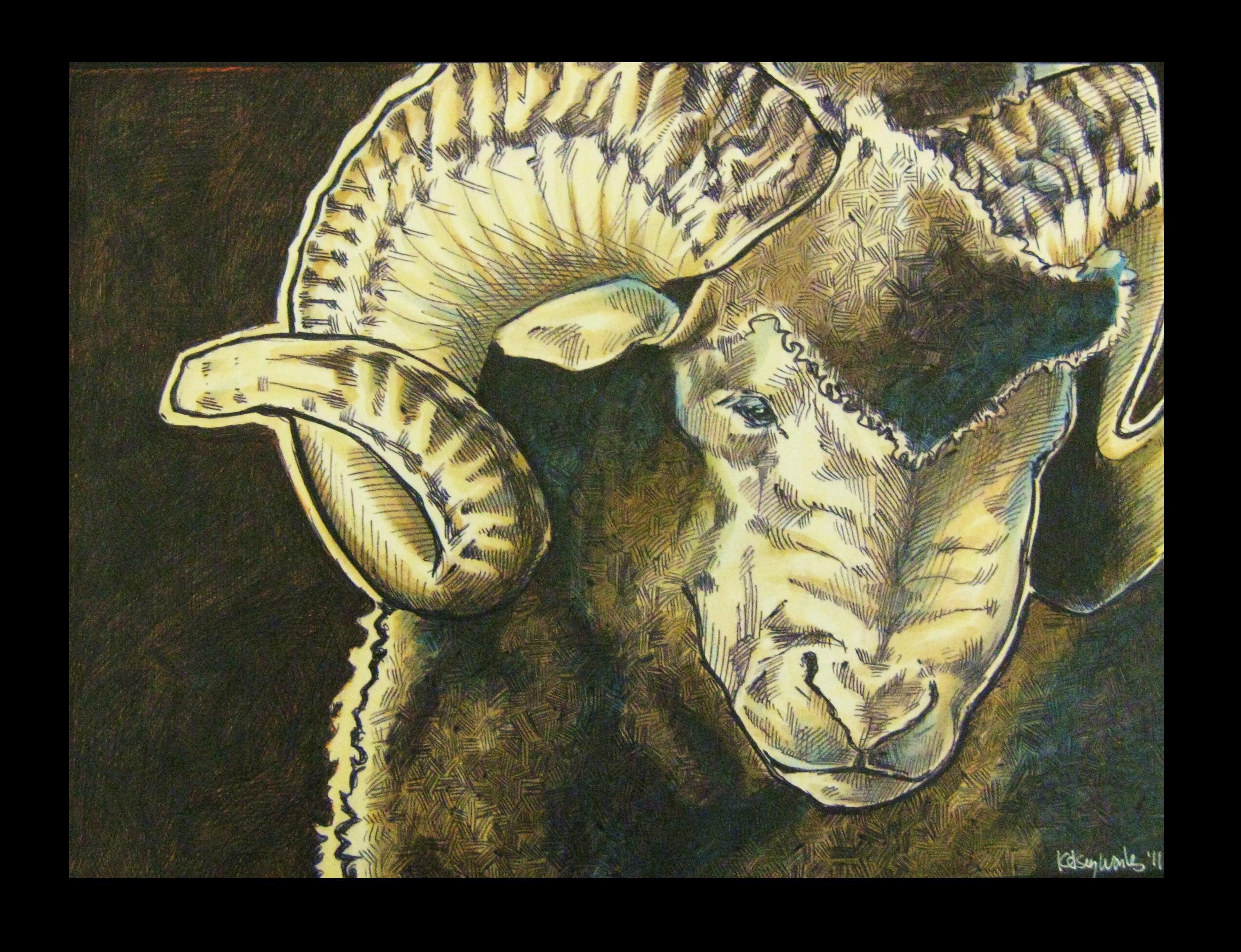 Merino ram by EatToast