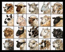 20 Sheepies