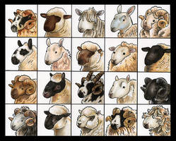 20 Sheepies