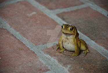 Toad Squat by EatToast