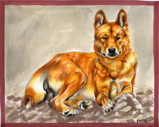 dingo by EatToast