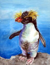 rockhopper penguin by EatToast