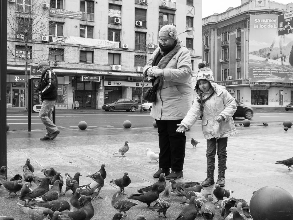 PIGEONS by marius1956
