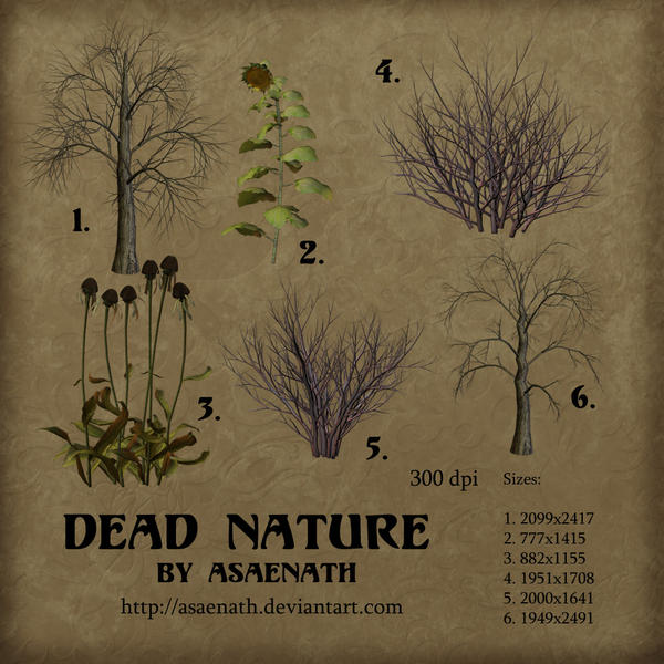 Dead Nature by Asaenath
