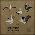 Pelicans by Asaenath