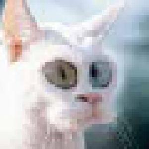 mcDarius's Profile Picture