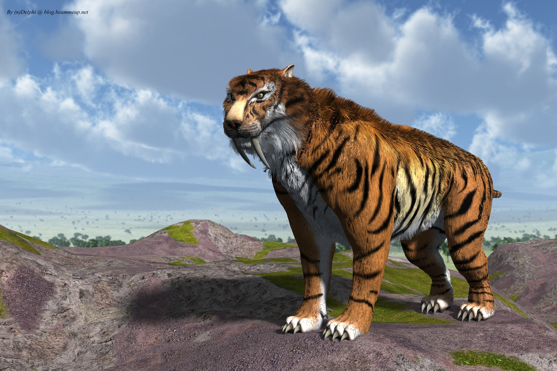sabre toothed tiger coloring pages fun coloring pages