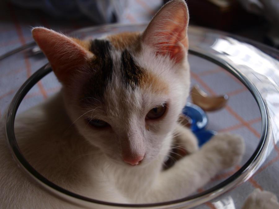 Sleepy kittie by Lord-LestatDlaCuadra