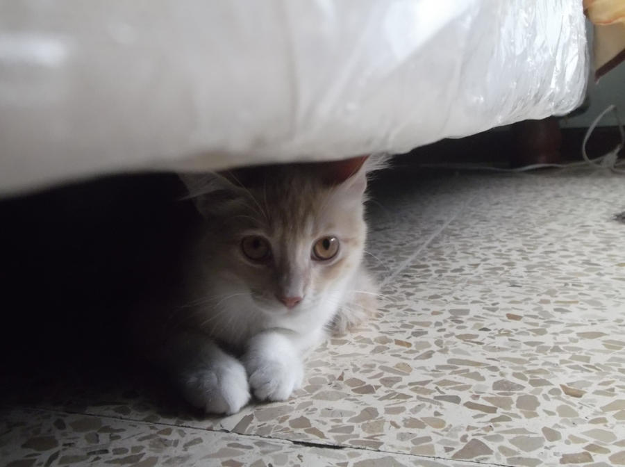 Cat curiosity by Lord-LestatDlaCuadra