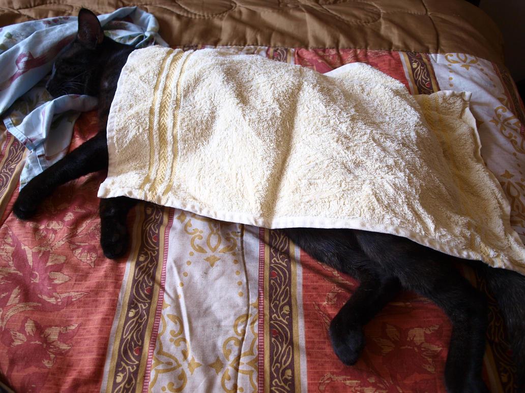 Sleeping kitty by Lord-LestatDlaCuadra
