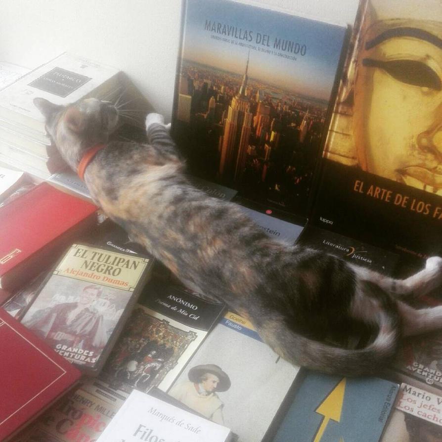 Cat and books by Lord-LestatDlaCuadra