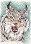Lynx - Speed painting