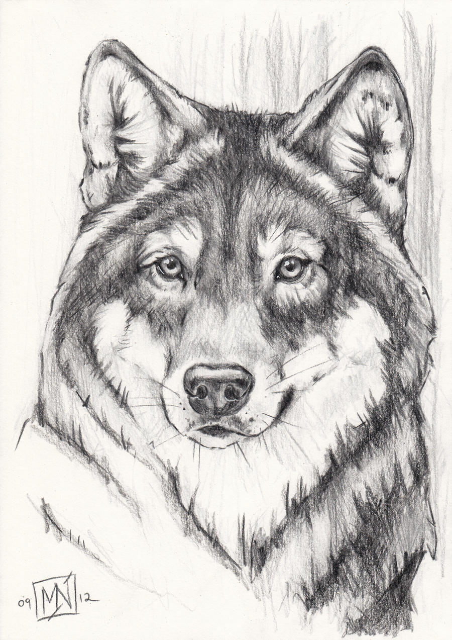 Grey Wolf Quick Portrait By Kattvalk How To Draw